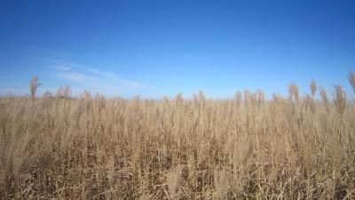 男三瓶山頂のススキ草原