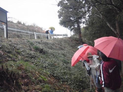 雨の中の観察会風景