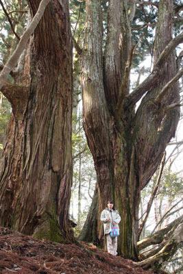 埋没林の樹種