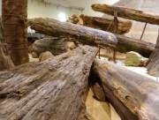 三瓶小豆原埋没林展示室内の流木群