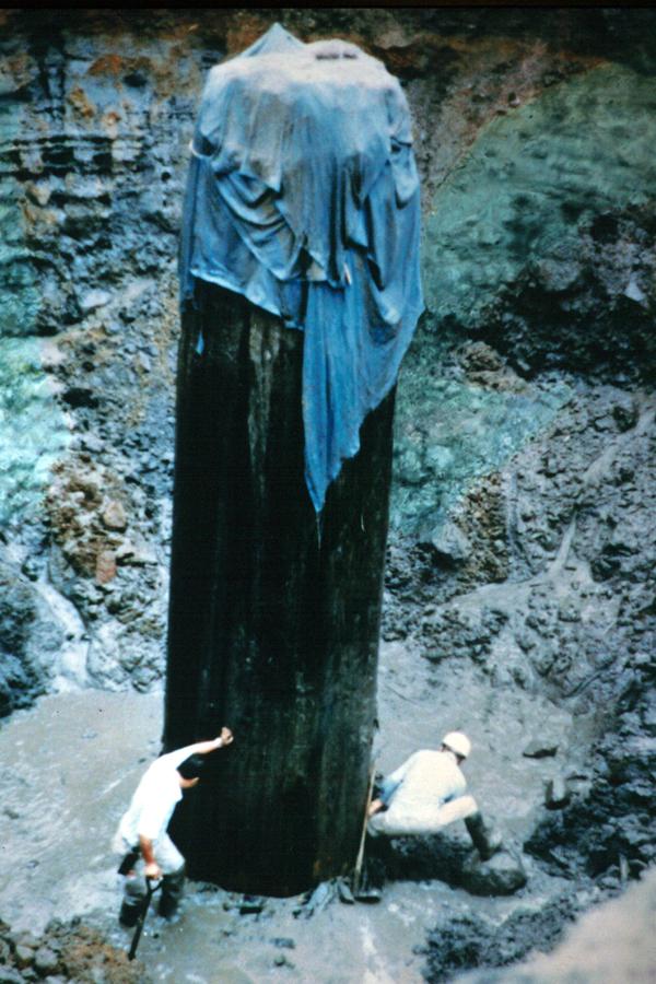 三瓶小豆原埋没林。1983年に出土した立木。